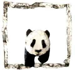 ' Panda ', 75x75x7cm, Hurda Metal, Kaynak