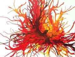 150x150 cm - TÜAB - 2008 - Charlito's