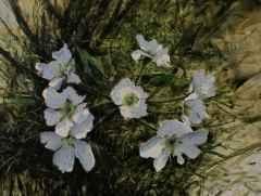 45x60 cm -  TÜYB - 2011- bahar çiçekleri