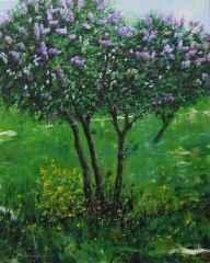 'Leylak Ağacı'<br />41x33 cm - TÜYB - 2013