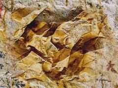 'Fosilleşmiş Bedenler' 60x80 cm, Yapay Kaya ÜKT