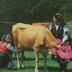 Atilla Alp Bölükbaşı - 20x20 cm