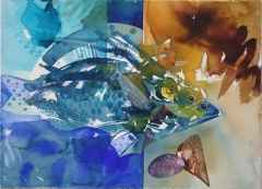 56x76 cm - K.Ü.S.B. - 2011 -  Pinalı Kabuklu